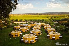 Still Waters Vineyard || Paso Robles