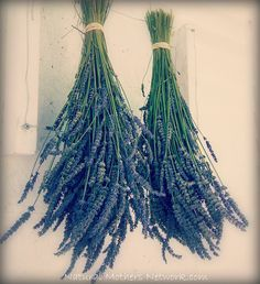 Lavender: growing, harvesting, drying and using it in home remedies and recipes.