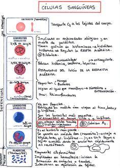 Células sanguíneas.