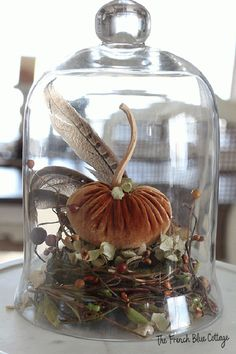It's Fall and that means it's time for all things pumpkin! Let's take an item that's usually reserved for Spring (a nest) and turn it into Autumn decor. Then we can add a velvet pumpkin, some feathers, and a cloche and have a beautiful centerpiece! #velvetpumpkin #fallcloche #fallcenterpiece Velvet Pumpkins, Fall Pumpkins, Mini Pumpkins, Cloche Decor, Fall Arrangements, The Bell Jar, Bell Jars, Autumn Decorating, Autumn Crafts