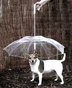 Amazon.com: Pet Umbrella (Dog Umbrella) Keeps your Pet Dry and Comfortable in Rain - Novelty Gag Gift: Pet Supplies