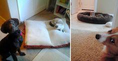 20 Pruebas que demuestran que los gatos son los verdaderos reyes del hogar, incluso sobre los perros. Cuando se trata de imponerse los gatos son los reyes del mandato