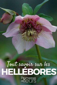 Cr er un massif de fleurs l 39 ombre deco jardin diy for Ou trouver de belles plantes artificielles