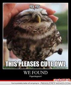 This is an owl?
