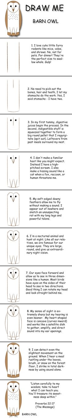 Draw a barn owl in 10 easy steps and learn fun facts about its life. © 2013 Marty Nystrom