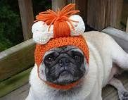 tejidos para mascotas pug fashion