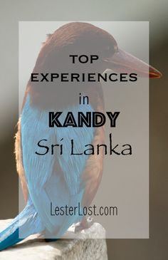 Kandy is the former capital of Singhalese kings and will welcome you for many fascinating cultural experiences. Enjoy your visit to Sri Lanka! via @Delphine LesterLost