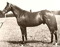 Bois Roussel (1935–1955) French-bred Thoroughbred champion racehorse & leading broodmare sire. He won the 1938 Epsom Derby on his 2nd race appearance. He was named for Haras du Bois-Roussel, the farm in Alençon where he was foaled. His breeder Leon Volterra acquired his sire, Vatout, & his dam as part of his purchase of Haras du Bois Roussel from American, Jefferson Davis Cohn. According to Thoroughbred Heritage, his dam, Plucky Liege, was one of the most important broodmares of the 20th…