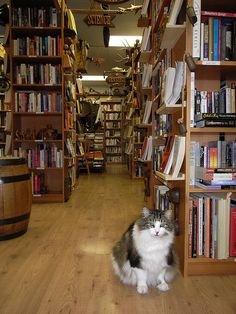 My kind of book store!  A independent bookstore with many used books exists like this one with lots of store resident cats.  It is called Twice Sold Tales on Capitol Hill area of Seattle, WA, USA :).