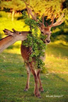 Lovely animals ✿⊱╮