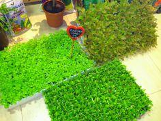 Planter ecològic