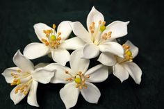 orange blossoms ... traditional in spanish weddings