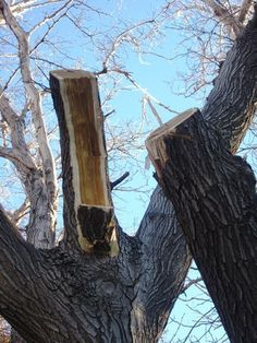 Fruit Tree Pruning at Its Best: How to Prune Large Branches