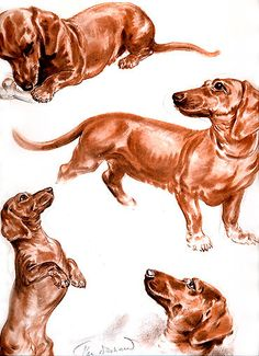Dachshund Vintage print from Diana Thorne's Dogs $15.00