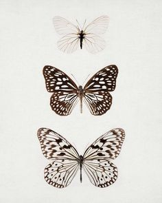 Blue Butterfly Discover Butterfly Print Nature Print Wall Art Prints Butterfly Art Vertical Print Minimalist Art Neutral Wall Decor Modern Home Decor Butterfly Photography Nature Insect Wings by EyePoetryPhotography Nature Prints, Art Prints, Art Papillon, 16 Tattoo, Butterfly Art, Simple Butterfly Tattoo, Butterfly Black And White, Butterfly Sketch, Butterfly Kisses