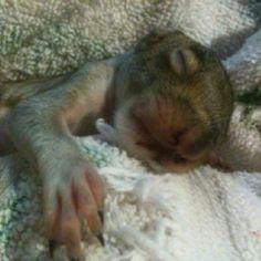 Lloyd my baby squirrel =•} 3/17/12