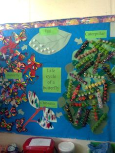 Life cycle of a butterfly, bulletin board ideas. Really neat looking !