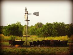 cows cooling under the windmill Nebraska, Oklahoma, Farm Windmill, Hereford Cows, Wind Machine, Old Windmills, Country Bumpkin, Wind Mills, Wind Of Change