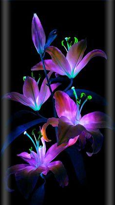 Flowers wallpaper by georgekev - - Free on ZEDGE™ Flower Background Wallpaper, Flower Phone Wallpaper, Neon Wallpaper, Butterfly Wallpaper, Flower Backgrounds, Colorful Wallpaper, Cellphone Wallpaper, Purple Flowers Wallpaper, Beautiful Flowers Wallpapers
