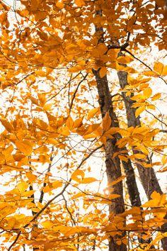 Snapshots of Autumn!!!