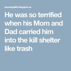 He was so terrified when his Mom and Dad carried him into the kill shelter like trash