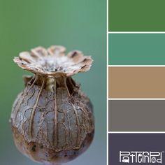 Pod #patternpod #patternpodcolor #color #colorpalettes