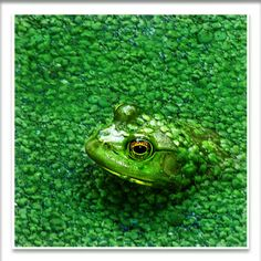 SPRING INTO THE ADVENTURE! HOW THE SYMBOLISM OF FROGS CAN SUPPORT US THROUGH CHANGE