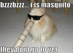Mosquitoes dont go to the vet :) Keep #dogs and #cats healthy, learn everything about #pet health here