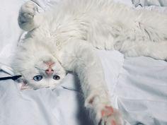 chaud lesbo chatte lesbiennes filles sexe Vedio