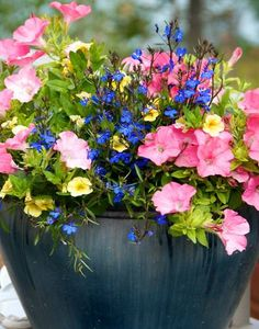 Pink, blue and yellow combination flowering container