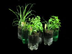 Recycled Bottles Herb Garden by GreenScaper, Diy Herb Garden, Indoor Garden, Outdoor Gardens, Inside Plants, Self Watering Planter, Hydroponic Gardening, Hydroponics, Edible Plants, Recycled Bottles