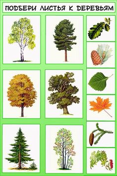 X Autumn Activities For Kids, Math For Kids, Science For Kids, Science And Nature, Teaching Plants, Montessori Kindergarten, Tree Study, Flower Names, Outdoor Crafts