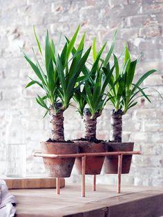 1000 id es sur le th me stands de plantes d 39 int rieur sur pinterest sup - Porte plante interieur ...