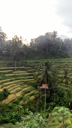 Villa Discover Bali Travel The rice fields in Ubud Sky Aesthetic, Travel Aesthetic, Voyage Bali, Honeymoon Places, Beautiful Places To Travel, Bali Travel, Ubud, Nature Pictures, Dream Vacations