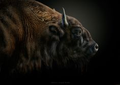 The Last of the Mohicans by Pedro Jarque Krebs on 500px