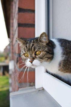 Ho la mia finestra sul mondo. Da lì do sempre un'occhiata, prima di uscire,  per essere sicura che non sia più conveniente restare nel comfort della mia solitudine.