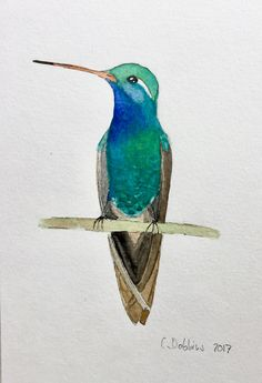 Ideas Humming Bird Sketch Hummingbird Drawing Art Prints For 2019 Watercolor Painting Techniques, Watercolor Projects, Watercolor Bird, Watercolor Animals, Bird Illustration, Watercolor Illustration, Hummingbird Drawing, Bird Sketch, Bird Wall Art