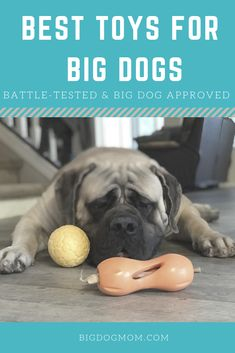 Top 10 Best Toys for Big Dogs: Battle-Tested and Big Dog Approved Buying toys for big dogs is no easy task. Here are the Top 10 BEST battle-tested, big dog approved toys perfect for all large and giant breed dogs. Giant Dog Breeds, Giant Dogs, Large Dog Breeds, Big Dogs, Large Dogs, Big Dog Toys, Dog Test, Durable Dog Toys, Dog Behavior