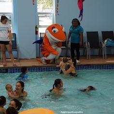 Waterworks Aquatics San Jose, CA Swim School, Kid Pool, Indoor Swimming Pools, Waterworks, San Jose, Bay Area, Orange County, Activities For Kids, Places