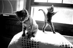 Adventurous kittens