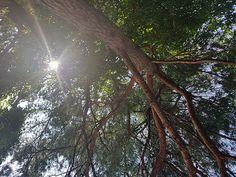 정말....몇년 만에 강원도 이름 모를 계곡 커다란 바위에 누워 나무 사이에 빛나는 햇살을 바라보다...고즈넉히...잠들어 버렸다.... 시간을 잊은 채.... Celestial, Plants, Outdoor, Outdoors, Flora, Plant, Outdoor Games, Outdoor Living, Planting