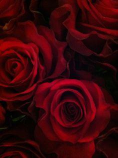 Rose http://media-cache-ec3.pinterest.com/736x/c1/61/9f/c1619f53a5c91779c9862a3b37aa724c.jpg