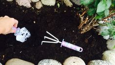 Ti tips til vakre roser Water Bottle, Tips, Gardening, Lawn And Garden, Water Bottles, Horticulture, Counseling