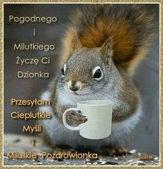 Powitanie Weekend Humor, I Love Coffee, Kittens Cutest, How To Know, Motto, Squirrel, Good Morning, Haha, Life Quotes