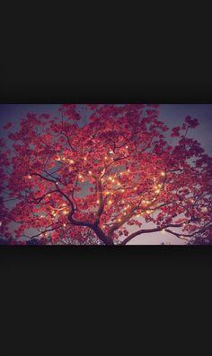 A tree I want to meet :)
