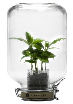 Serre autonome Jar / Mini caféier inclus - H 28 cm Transparent - Pikaplant - Décoration et mobilier design avec Made in Design