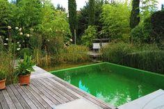Schwimmen im  Garten. Kleiner Schwimmteich mit Holzdeck. Hier gut sichtbar: Übergang von Schwimmzone zu Regenerationsbereich.