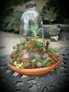 Succulents in a bell jar