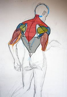 Character Design Collection: Male Anatomy - Daily Art, references