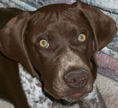 My Bo at 4 months old...he is now almost 9 yrs old....love the amber eyes!